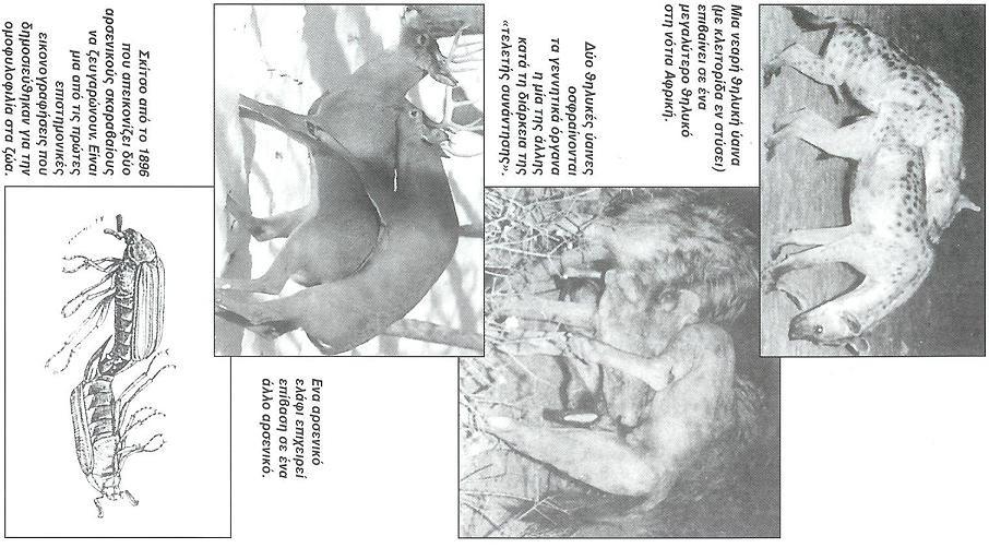 Πατήστε στην εικόνα για να τη δείτε σε μεγένθυνση  Όνομα:  kundalini.jpg Εμφανίσεις:  161 Μέγεθος:  13,3 KB