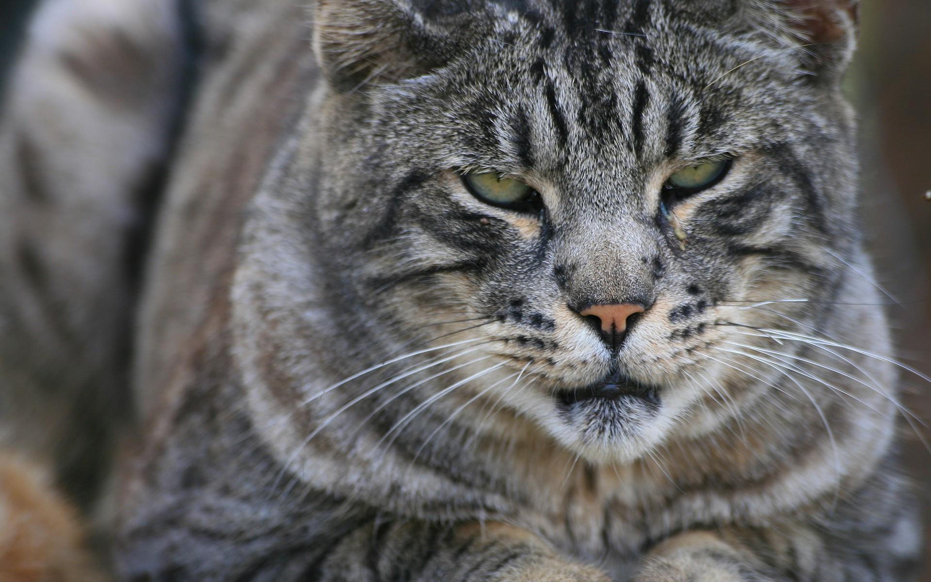 Πατήστε στην εικόνα για να τη δείτε σε μεγένθυνση  Όνομα:  -Nature-Cats-Fresh-New-Hd-Wallpaper--.jpg Εμφανίσεις:  157 Μέγεθος:  545,3 KB