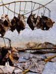 Forbidden-Leaves.png